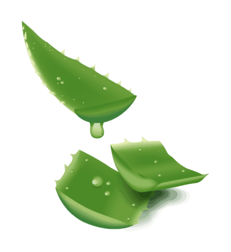 Aloe vera , cel mai puternic ingredient pe care il gasiti in Produse Forever